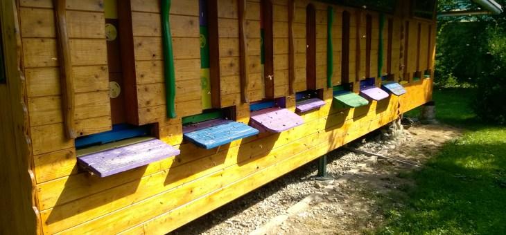 Jak bydlí včelky