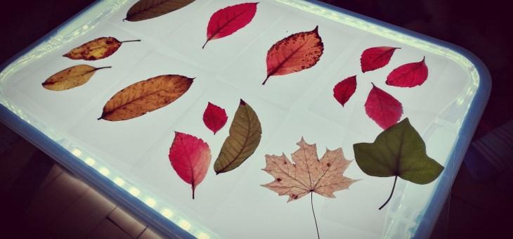 Light box a podzimní listy