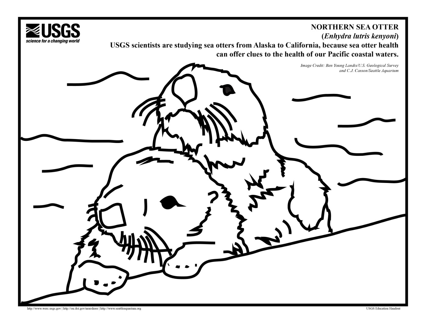 Otter Coloring Pages Download And Print For Free