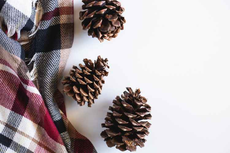 brown pine cone on white surface