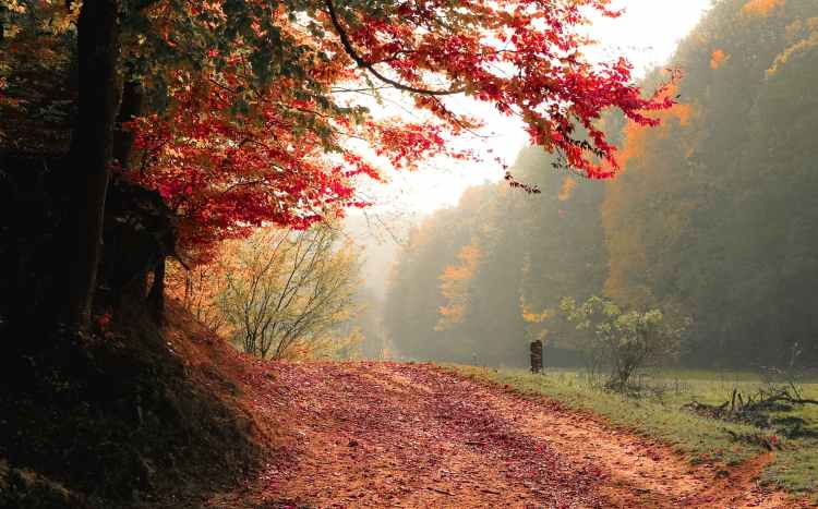 red leafed tree near green grass