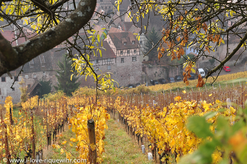 Riquewihr seen from the Schoenenbourg vineyard