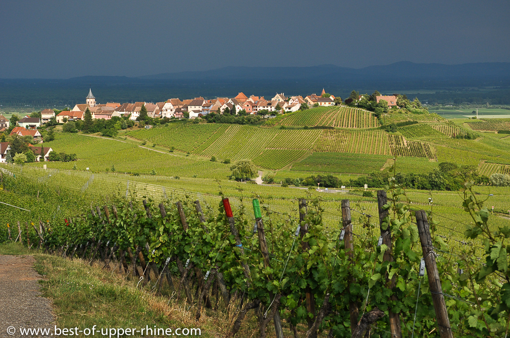 The Alsace Wine Route celebrates its 60th anniversary