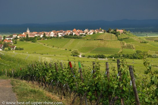 Vineyards near Zellenberg and Riquewihr on the Alsace Wine Route