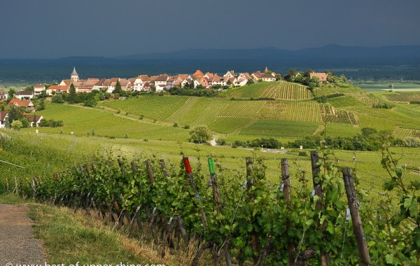 Vineyards near Zellenberg and Riquewihr