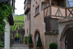 harvesting grapes on the Schoenenbourg hill in Riquewihr. The house on the right side is our new vacation rental property.