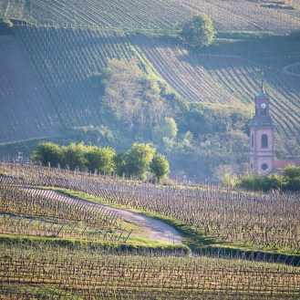 Church tower among the vineyards
