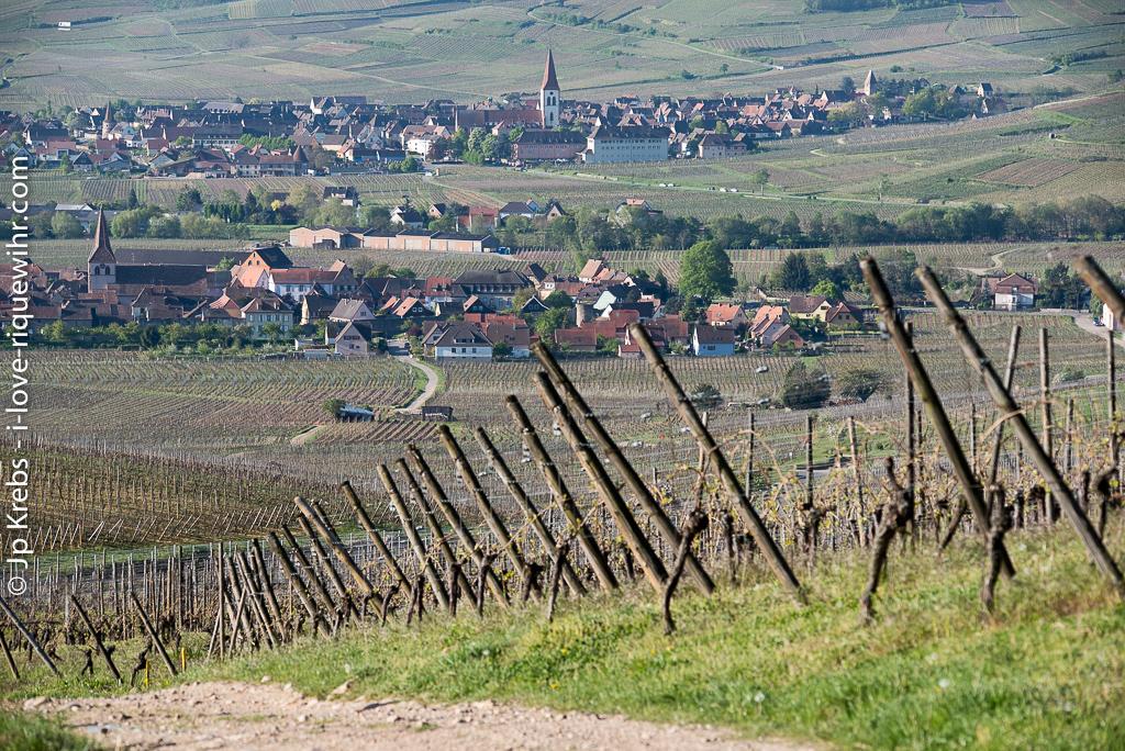 Kientzheim and Ammerschwihr, on the south side of the hills