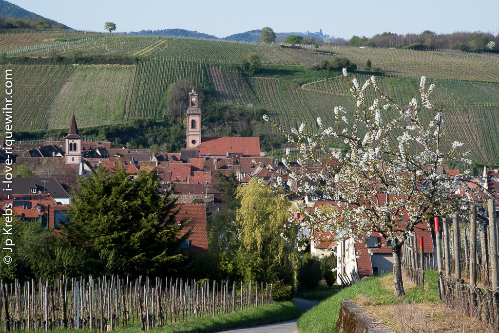 A view of Riquewihr to the north