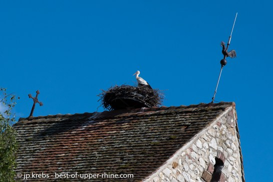 stork on the top of the church