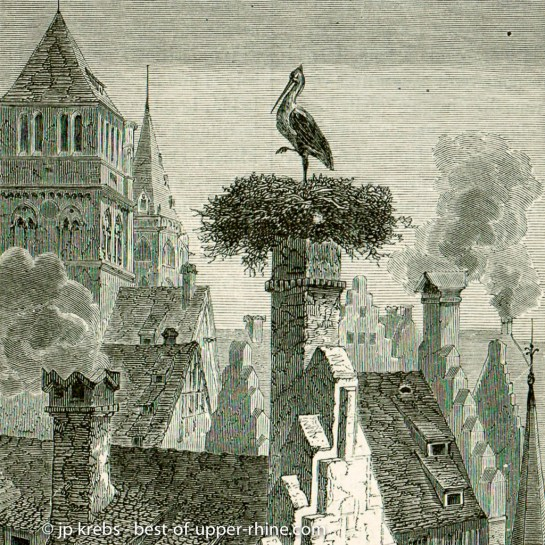 Stork on the rooftops of Strasbourg.