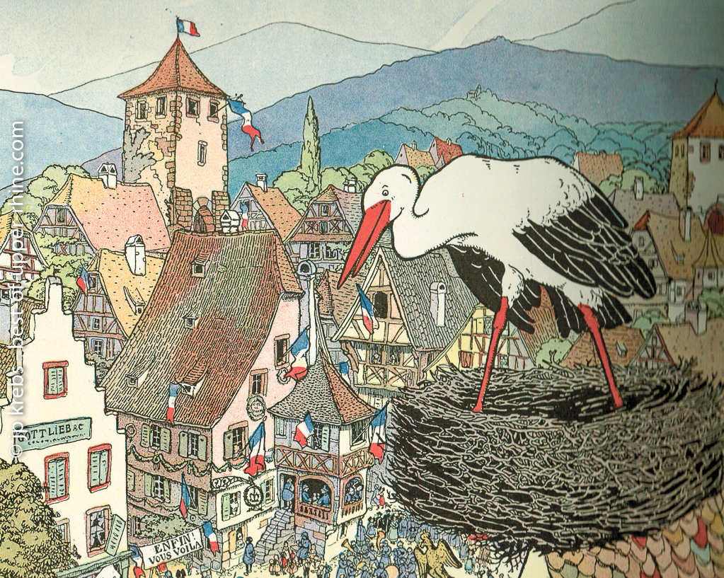 The White Stork, my beautifull queen of Alsace