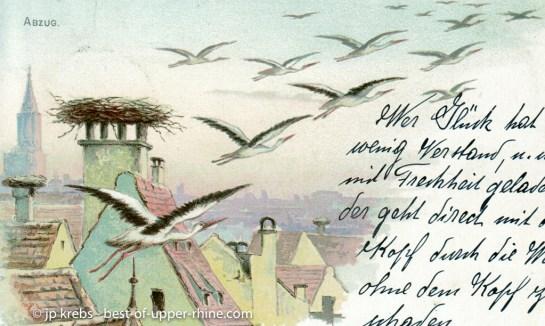 Departure of storks for migration.