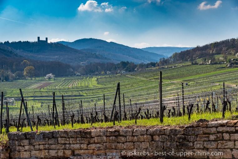 Mittelbergheim most famous vineyards on the Zotzenberg hill