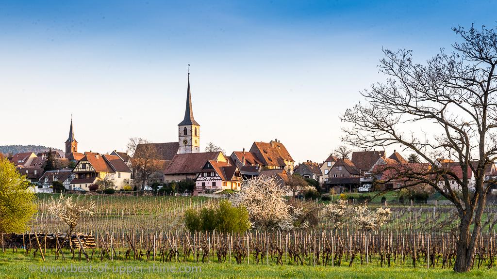 Mittelbergheim sur la route du vin d'Alsace.
