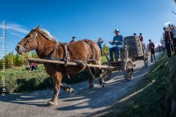 Pushed by the weight of the load and the cart, in the steep slope, our proud mare has no choice but to scamper at a pace of hell!