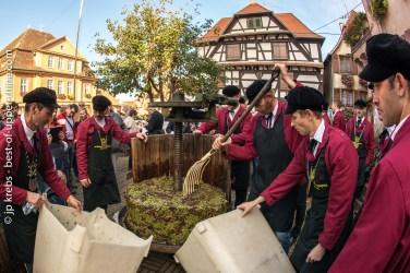 dambach-vendanges-bienheureux-frankstein-15oct16-1464