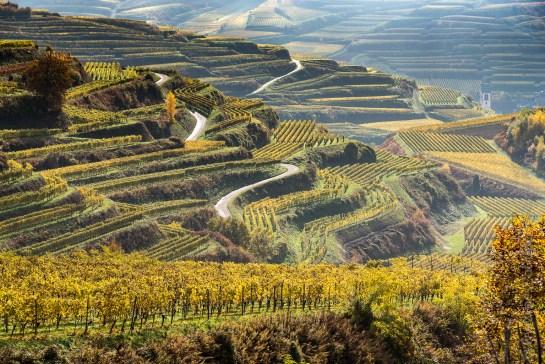 Vineyards in the Kaiserstuhl, Germany
