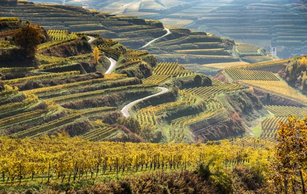 Vineyards in the Kaiserstuhl, Germany