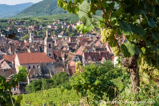 Riquewihr seen from the famous Schoenenbourg vineyard in September …