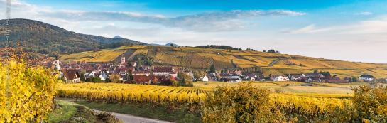 Panoramic view of the grand cru Schoenenbourg vineyard and Riquewihr.