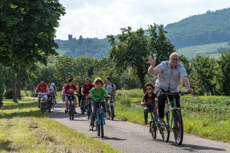 Slow Up Alsace 2016, on the bike path between Kintzheim and Sélestat. The castle of the Eagles' hut on the horizon ...
