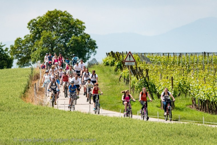 Slow Up Alsace 2016. On the Vineyard Cycle Route.