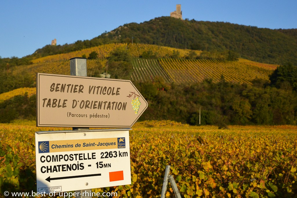 At the foot of the Ortenbourg, medieval castle overlooking the vineyards of the Rittersberg hillside, near the village of Scherwiller, known for its Riesling.