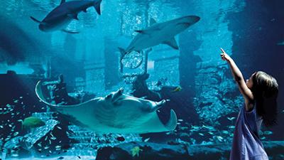 caribbean marine habitat