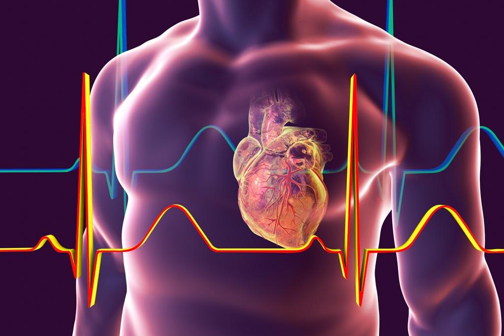 Ihr Herz-Kreislauf-System: