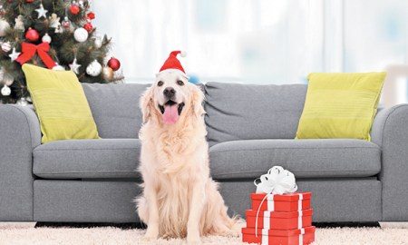 Happy dog with Christmas tree and holiday presents - Tips to Keep Your Pup Happy at Every Age