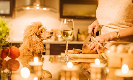 these 6 holiday foods arent safe for dogs - These 6 Holiday Foods Aren't Safe for Dogs