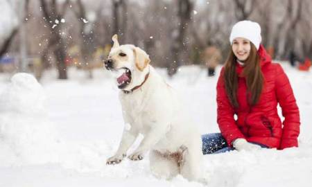 1514839919 dont miss these january 2018 dog events - Don't Miss These January 2018 Dog Events