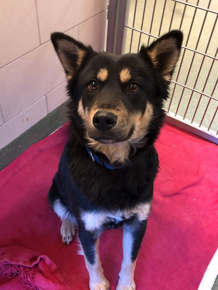 dog-rescued-note-collar-dunkin-donuts (1)