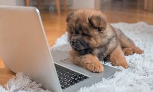 1516117368 4 dog tech products we love - 4 Dog Tech Products We Love
