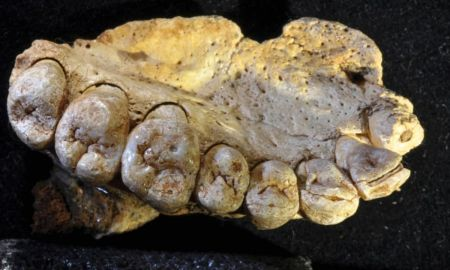 1517130206 jawbone discovered in israel is the earliest modern human fossil outside of africa - Jawbone discovered in Israel is the earliest modern human fossil outside of Africa