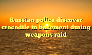 Russian police discover crocodile in basement during weapons raid