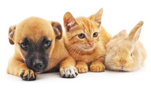 rescue pets only in california pet stores - Rescue Pets Only in California Pet Stores