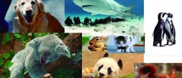 Top 10 curiosidades de los animales