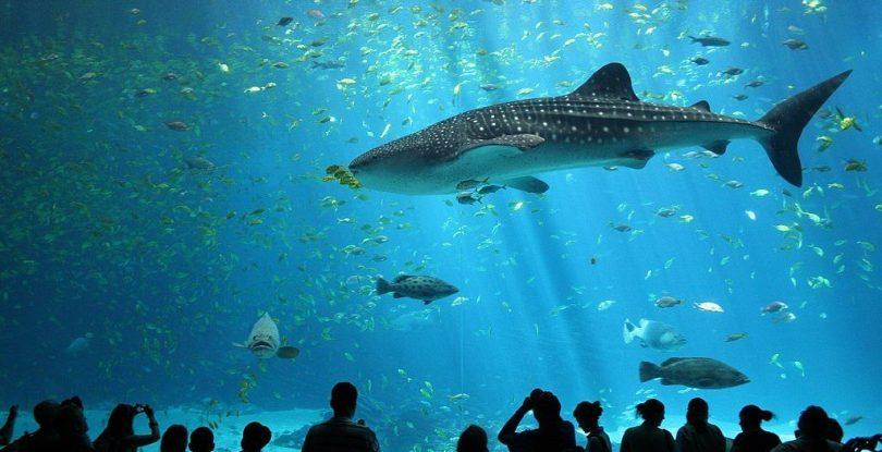 Dubai Aquarium & Underwater Zoo is one of the world's largest aquarium