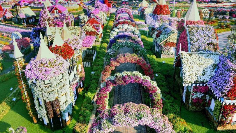 Dubai Miracle Garden is the biggest flower garden in the world
