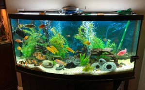 can a fish tank in your bedroom make you sick