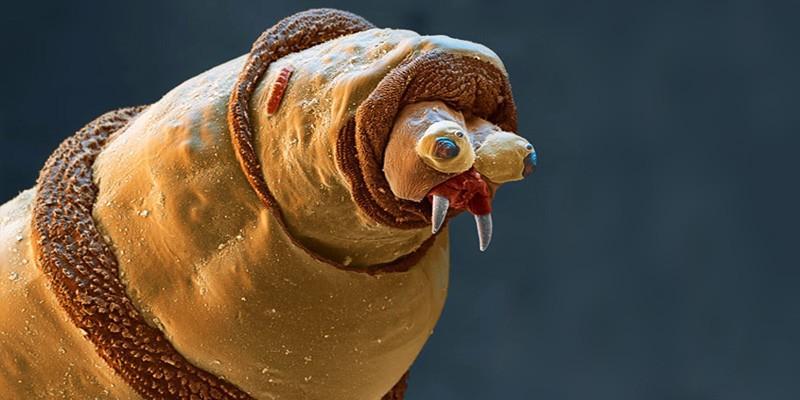 Risultati immagini per parassiti