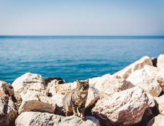 8 Tips to Make Travelling with Your Cat Less Stressful