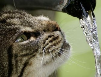 Top 5 Best Cat Water Fountains
