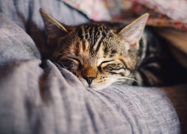 Home Remedies for Cats with Diarrhea - Smart Cat