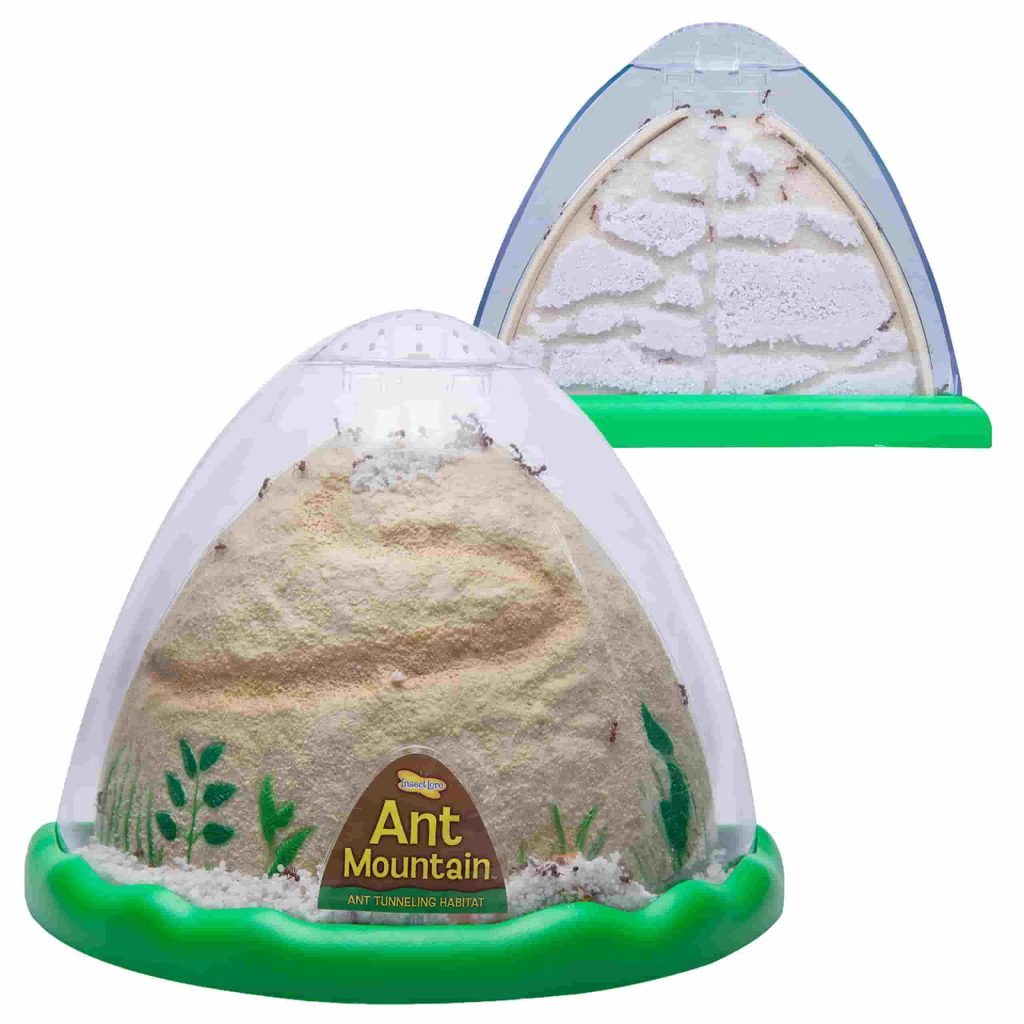 Best Sand Ant Farms For Kids Review List Of 5 Cool