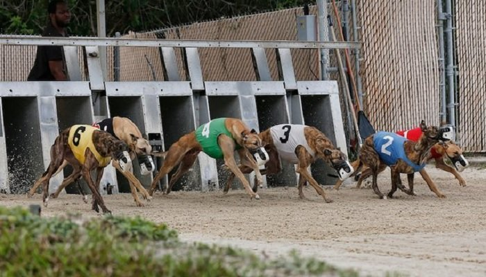 New Greyhound Consolation Bets at Quinnbet 1