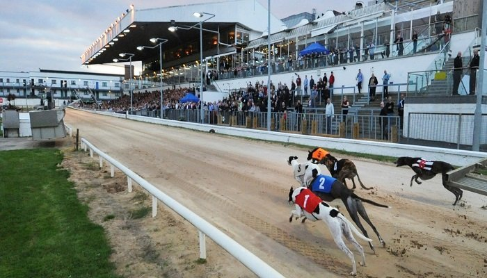 Best Bets for the Irish Greyhound Derby 1
