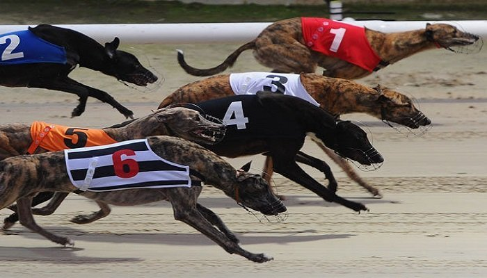 Early Betting on the Brighton Belle Greyhound Race 1